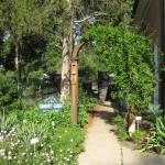 Glencarlyn Branch Library Community Garden