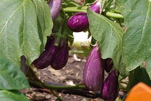 About Our Garden Programs